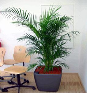Decoracion con plantas para espacios verdes